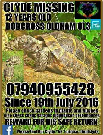Missing Tortoise Exotic in Oldham