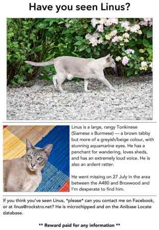 Missing Tonkinese Cats in Hr5