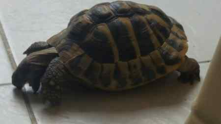 Missing Tortoise Exotic in Over Stratton