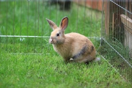 Missing Unknown - Other Rabbits in Stoke Poges