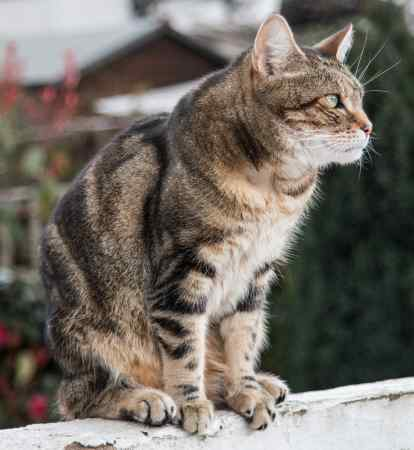 Lost Domestic Short Hair Cat in Streatham