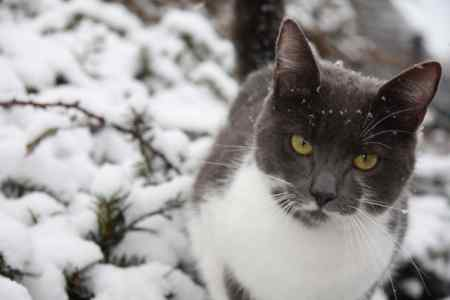 Missing Domestic Short Hair Cats in Thorverton