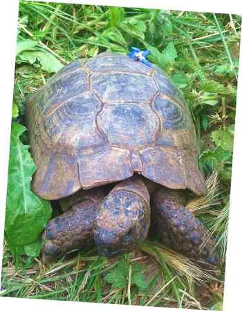 Missing Tortoise Exotics in Tydd St Giles, Wisbech