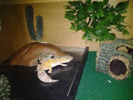 Missing Gecko Exotics in Norwich