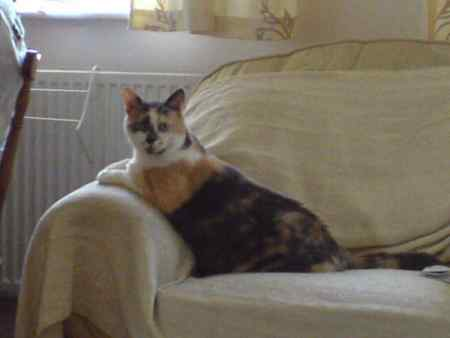 Missing Tortoiseshell Cats in Leyton