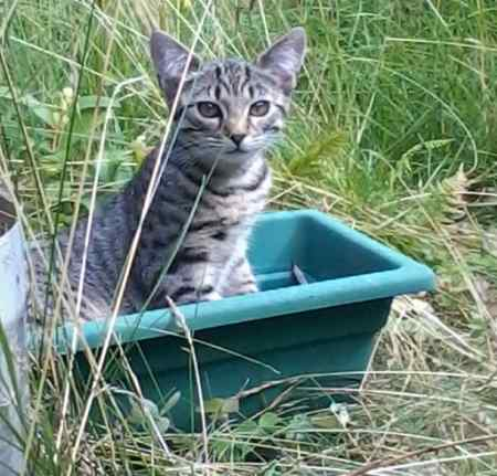 Missing Tabby Cat in Bolton