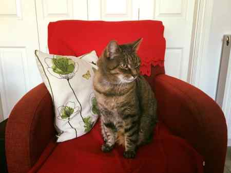 Missing Tabby Cat in Temple Gate, Whitkirk, Leeds