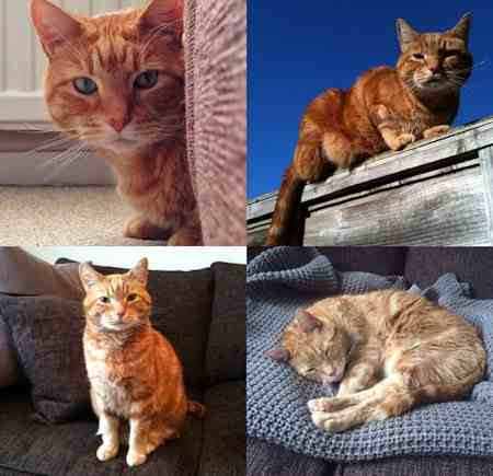 Missing Tabby Cat in Maidstone