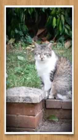 Missing Tabby Cat in Exeter