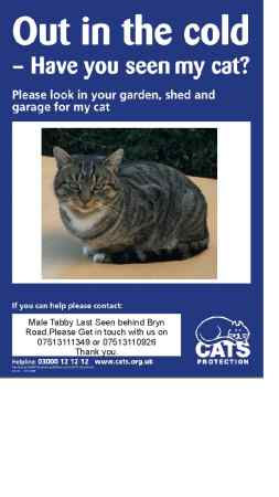 Missing Tabby Cat in Llanelli/burry Port