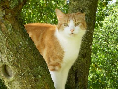 Missing Domestic Short Hair Cats in Ilketshall St Lawrence, Suffolk