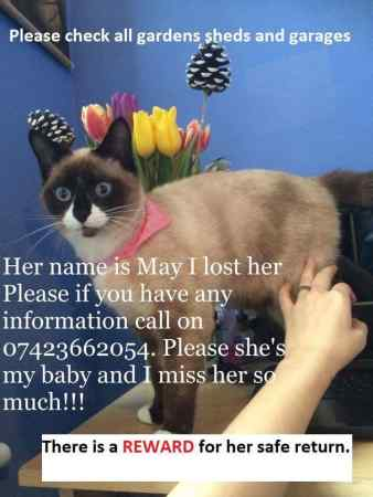 Missing Siamese Cat in Beckton