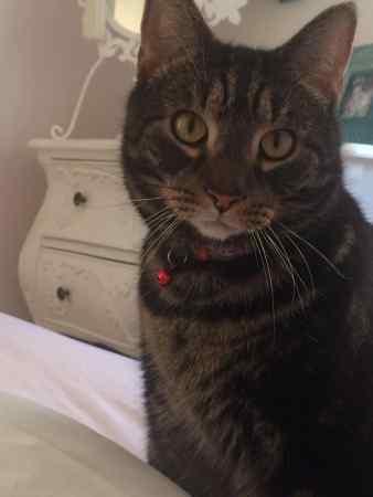 Lost Black Cat Islington