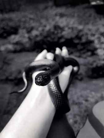 Missing Kingsnake Snake in London
