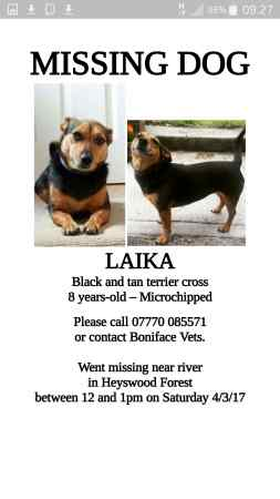 Lost Terrier Dog in Eggesford