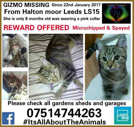 Missing Domestic Short Hair Cats in LEEDS