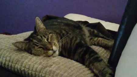 Missing Tabby Cat in Chigwell