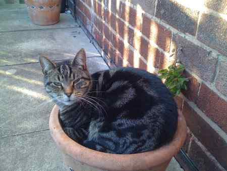 Missing Tabby Cats in NORWICH