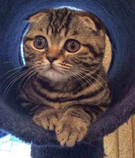 Missing Tabby Cat in Pulborough