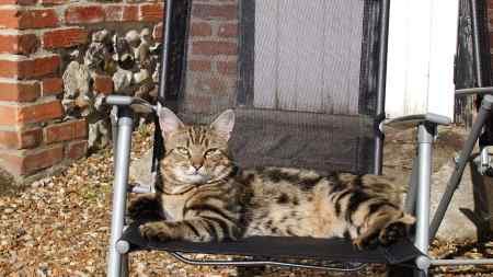Missing Tabby Cat in Hilborough