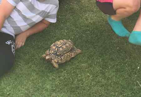 Missing Tortoise Exotics in Hutton