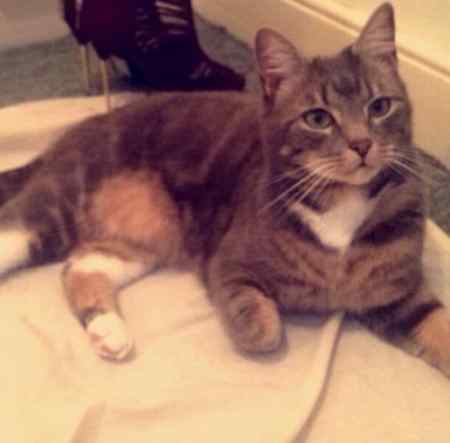 Missing Tabby Cat in Newcastle Upon Tyne