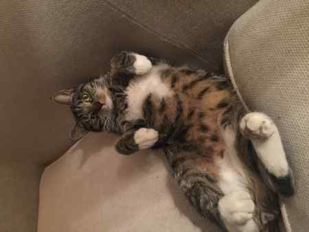 Missing Tabby Cat in Wandsworth