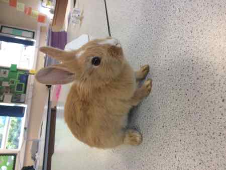 Missing Unknown - Other Rabbits in Uttoxeter