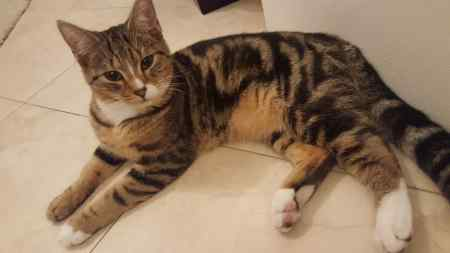 Missing Tabby Cats in Bishops Itchington