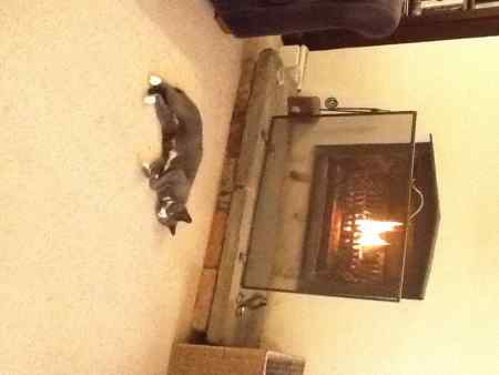 Lost Domestic Short Hair Cat in Crosby Liverpool