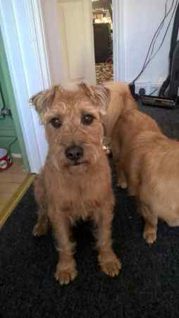 Missing Cross Mixed Dog in Bournemouth