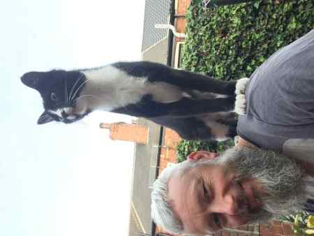 Missing Domestic Short Hair Cats in Pontefract