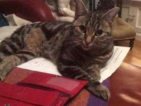 Missing Tabby Cats in Bristol