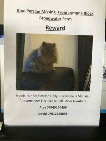 Missing Persian Cat in London