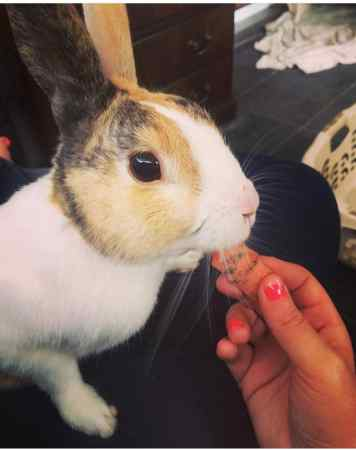 Missing Unknown - Other Rabbits in South Harrow