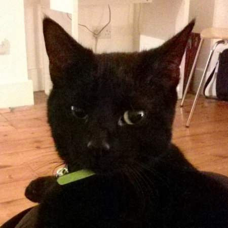 Missing Domestic Short Hair Cats in South London