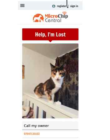 Missing Domestic Short Hair Cats in Streatm London