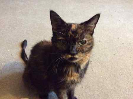 Missing Tortoiseshell Cats in OXFORD