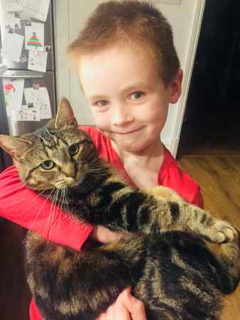 Missing Tabby Cat in Heaton Mersey