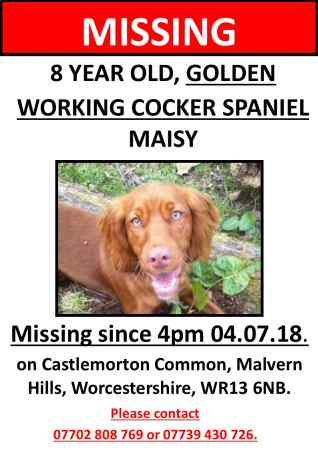 Missing Spaniel Dog in Castlemorton Common