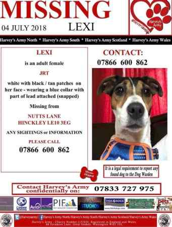 Missing Jack Russell Dog in Hinckley