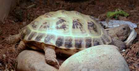 Lost Tortoise Exotic in Orpington