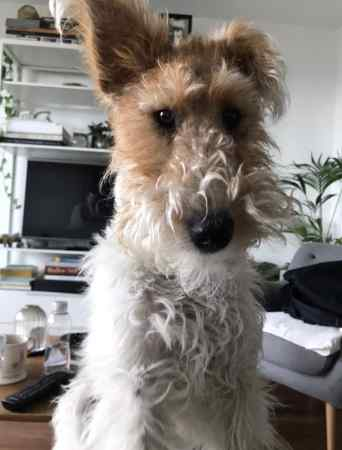 Missing Unknown - Other Dogs in London, Hackney Marshes