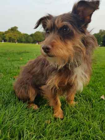 Missing Unknown - Other Dog in Highams Park