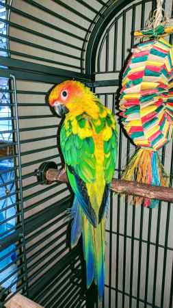 Missing Parrot, Parakeet Birds in Rochdale