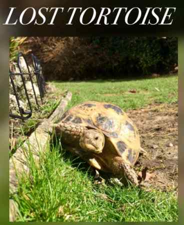 Lost Tortoise Exotic in Cannock