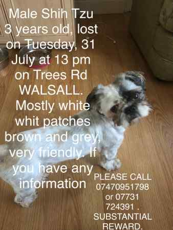 Missing Shih Tzu Dog in Walsall