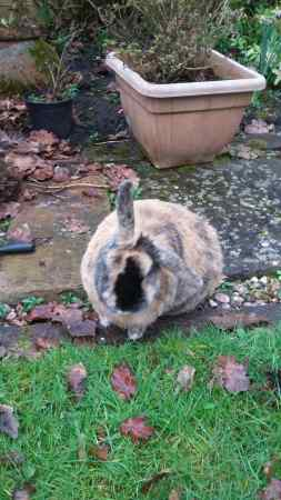 Missing Unknown - Other Rabbits in Wirral