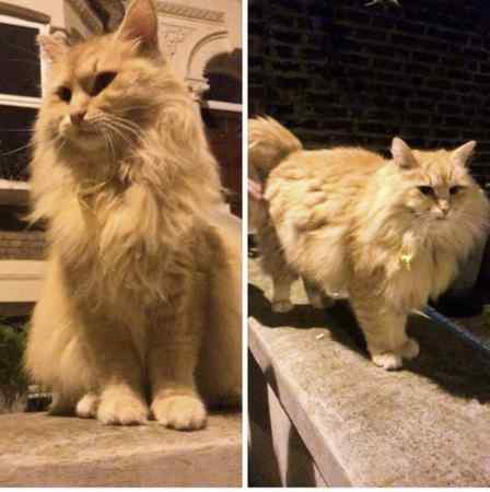 Missing Unknown - Other Cats in London