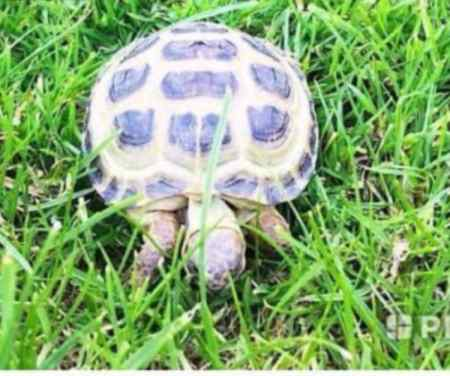 Lost Tortoise Exotic in Dunfermlin